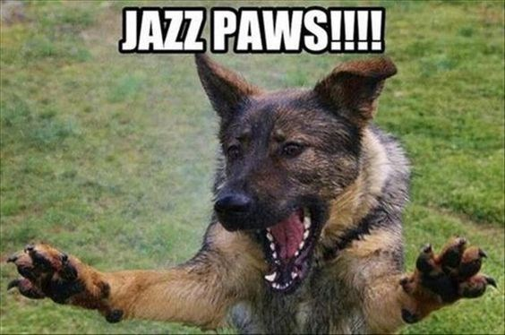 Dog - JAZZ PAWS!!