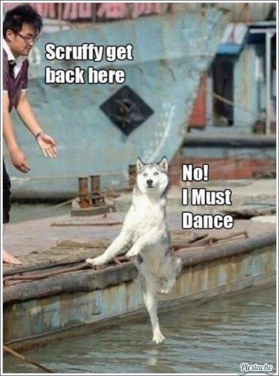 Canidae - Scruffy get back here No! IMUST Dance ofapeza mo Picstache