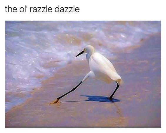Bird - the ol' razzle dazzle