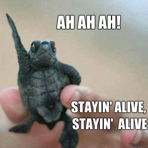 Tortoise - AH AH AH! STAYIN' ALIVE, STAYIN' ALIVE quickmeme.coms