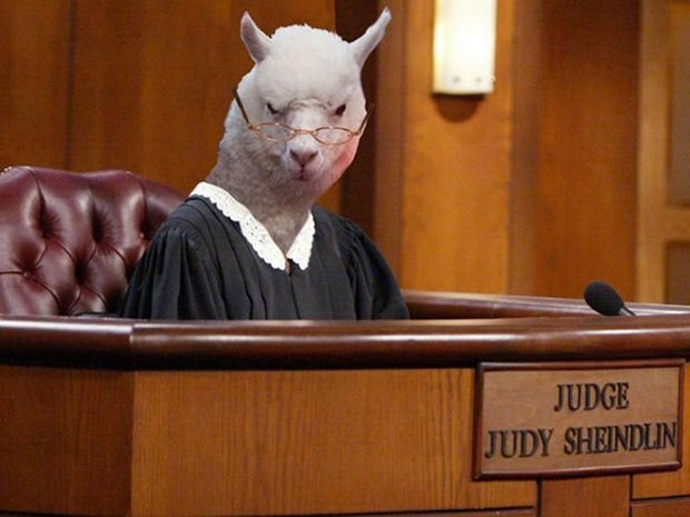 Court - JUDGE JUDY SHEINDLIN