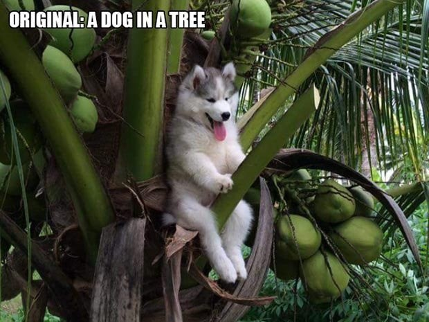 Siberian husky - ORIGINAL: A DOG INA TREE