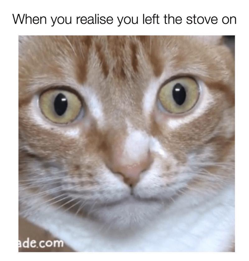 Sudden realization cat