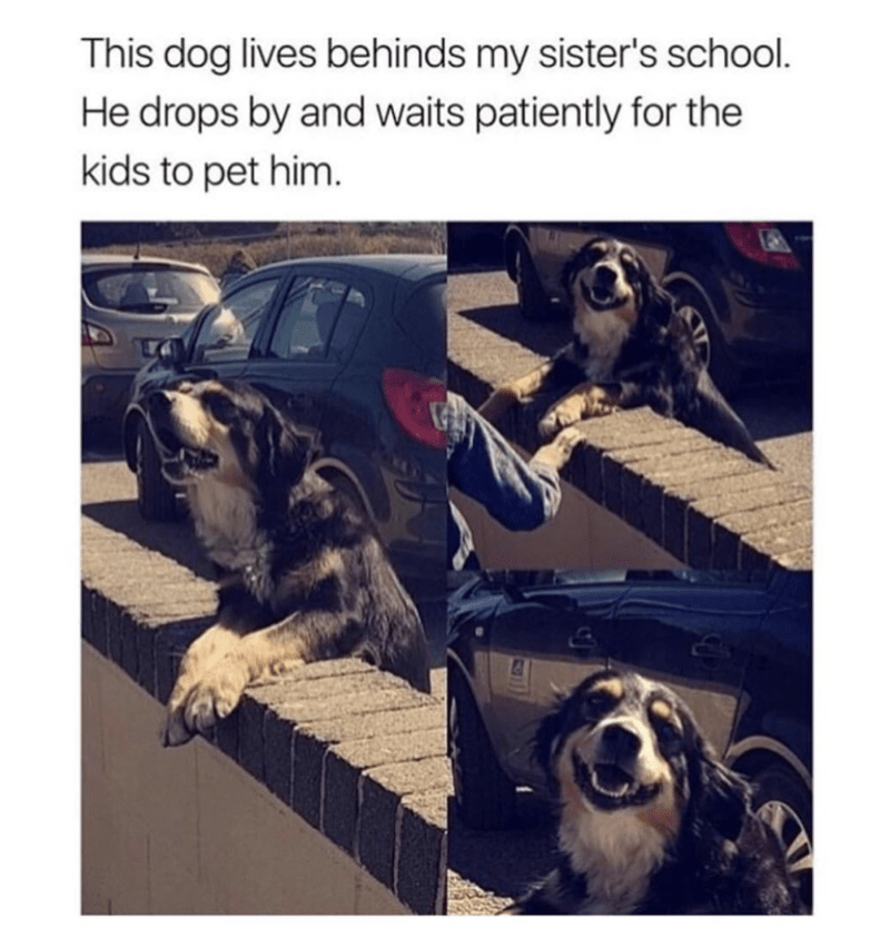 cute meme of a dog that waits outside the school for kids to play with him.