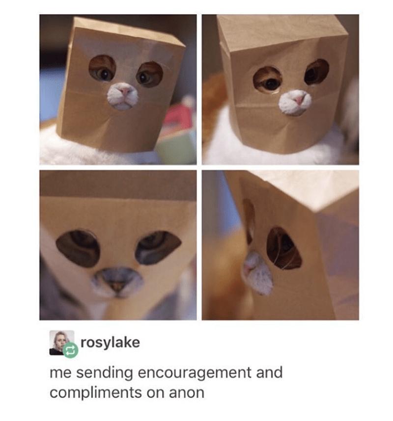 Brown bagged cat