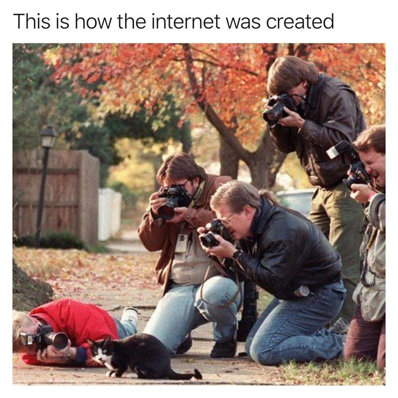 Funny meme about how the internet was created, lots of people taking photos of one cat.