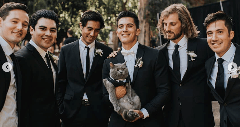 cat groomsmen sporting tuxedo cute as can be