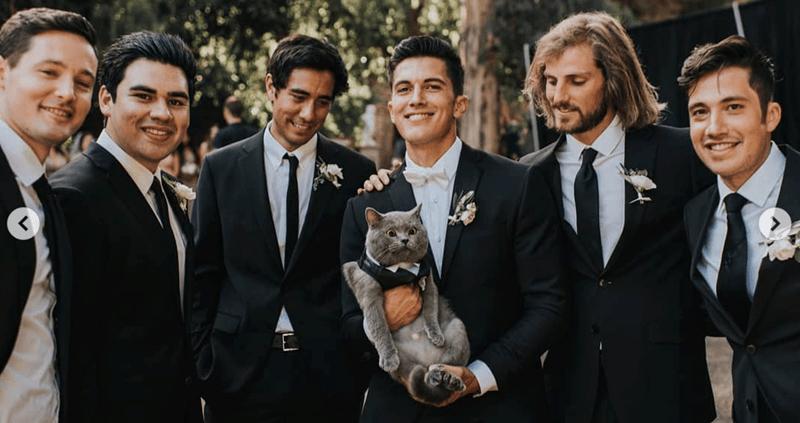cat groomsmen sporting tuxedo cute as can be