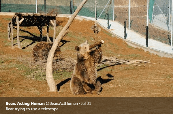 Zoo - Bears Acting Human @BearsActHuman Jul 31 Bear trying to use a telescope.