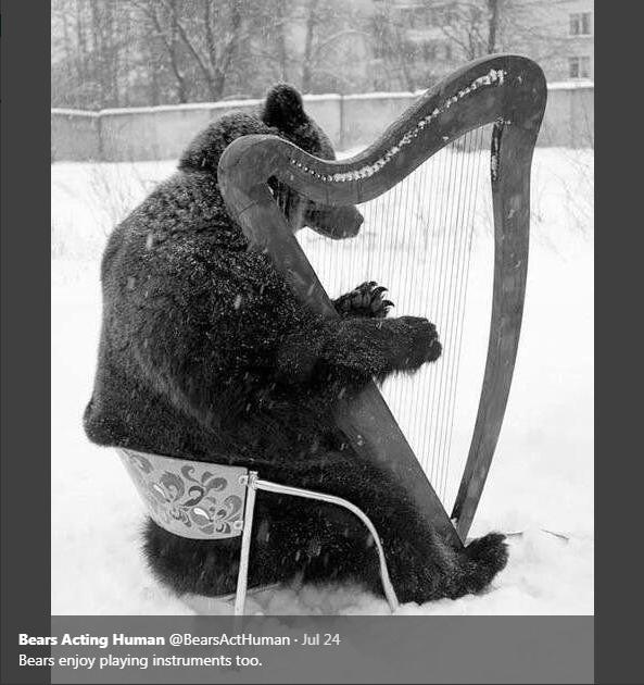 String instrument - Bears Acting Human @BearsActHuman - Jul 24 Bears enjoy playing instruments too.