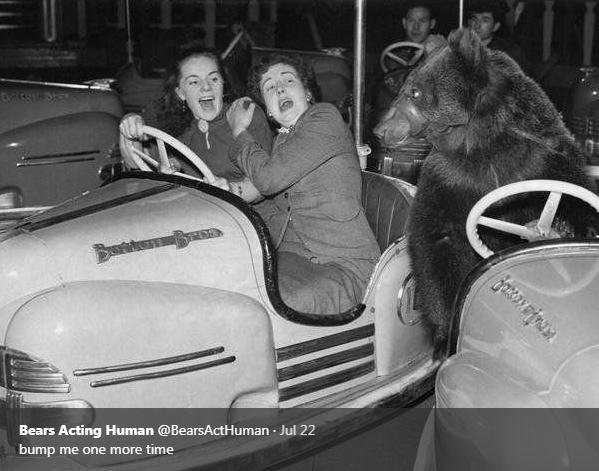 Motor vehicle - Bears Acting Human @BearsActHuman Jul 22 bump me one more time