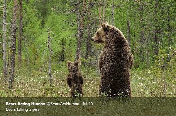Brown bear - Bears Acting Human @BearsActHuman Jul 20 bears taking a piss