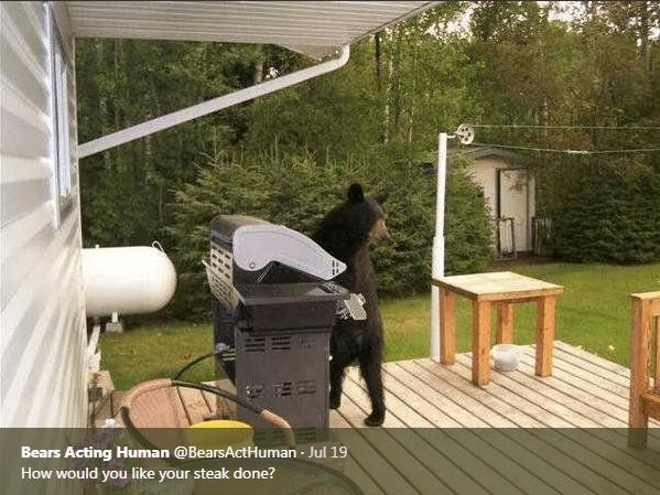 Backyard - Bears Acting Human @BearsActHuman Jul 19 How would you like your steak done?