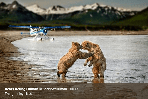 Canidae - Bears Acting Human @BearsActHuman Jul 17 The goodbye kiss. ROM