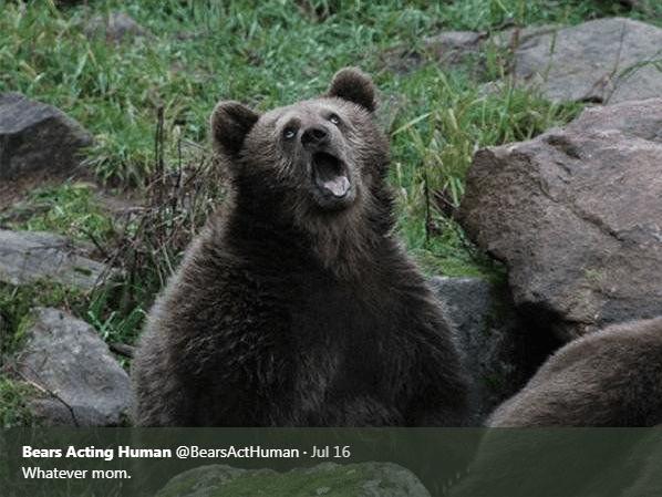 Brown bear - Bears Acting Human @BearsActHuman Jul 16 Whatever mom.