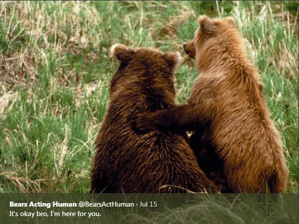 Brown bear - Bears Acting Human @BearsActHuman Jul 15 It's okay bro, I'm here for you.