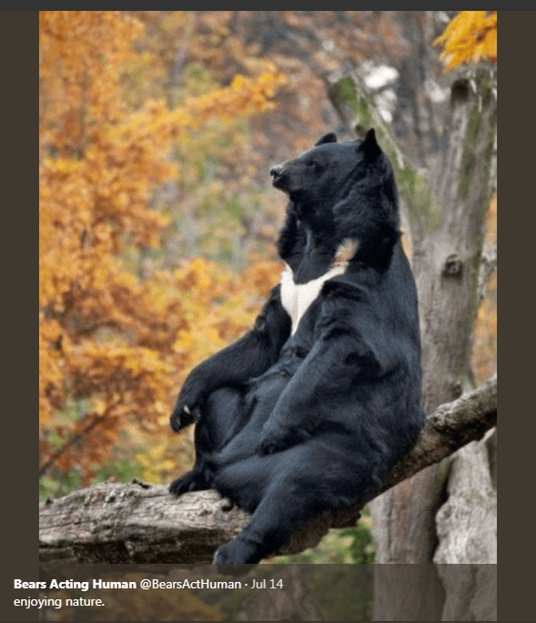 Wildlife - Bears Acting Human @BearsActHuman Jul 14 enjoying nature.