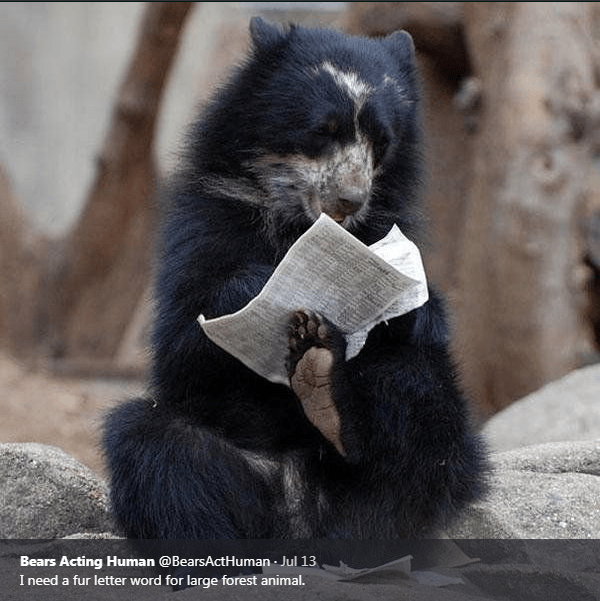 American black bear - Bears Acting Human @BearsActHuman Jul 13 I need a fur letter word for large forest animal.