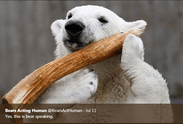 Vertebrate - Bears Acting Human @BearsActHuman Jul 11 Yes, this is bear speaking