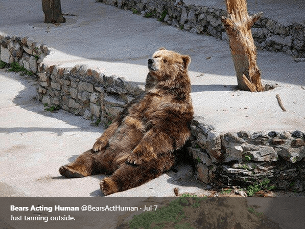 Brown bear - Bears Acting Human @BearsActHuman Jul 7 Just tanning outside.