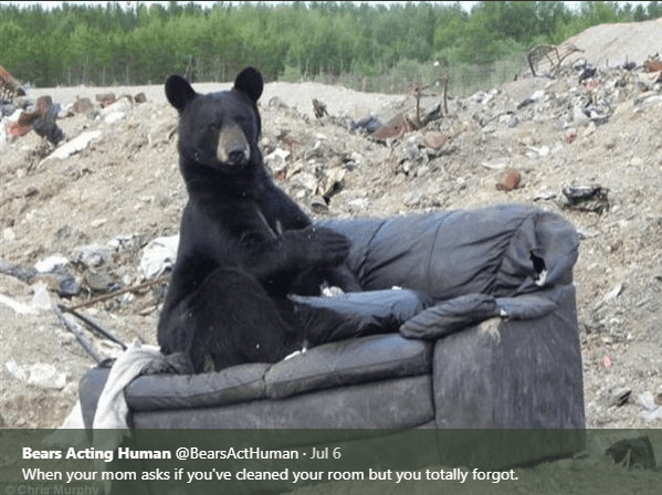 Terrestrial animal - Bears Acting Human @BearsActHuman Jul 6 . When your mom asks if you've cleaned your room but you totally forgot.