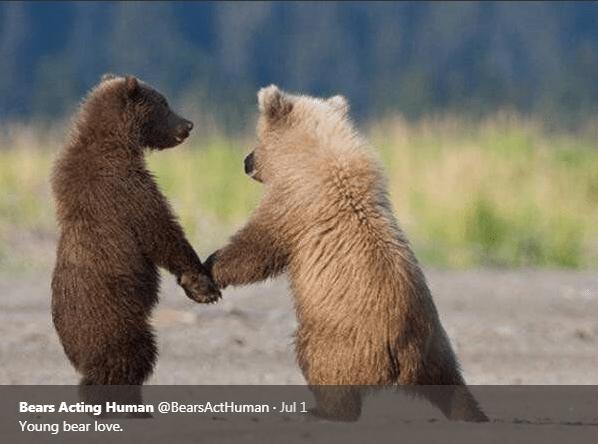 Mammal - Bears Acting Human @BearsActHuman Jul 1 Young bear love.