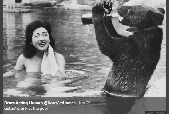 Photograph - Bears Acting Human @BearsActHuman Jun 29 Gettin' drunk at the pool Getty Images 0