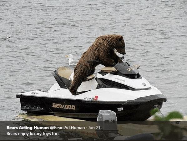Jet ski - M-174 SEADO Bears Acting Human @BearsActHuman Jun 21 Bears enjoy luxury toys too.