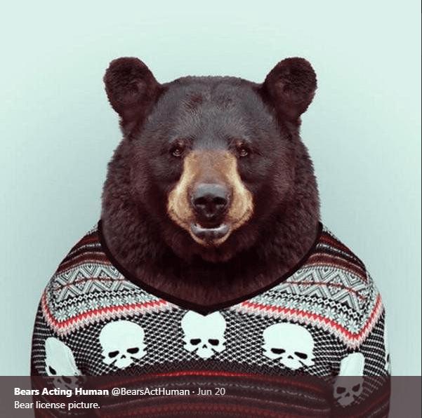 Bear - Bears Acting Human @BearsActHuman Jun 20 Bear license picture.