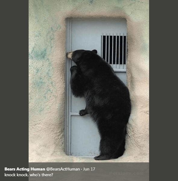 Bear - Bears Acting Human @BearsActHuman Jun 17 . Rorsian.com knock knock. who's there?