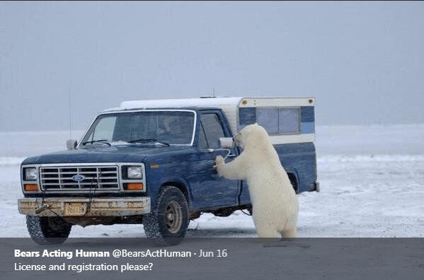 Vehicle - Bears Acting Human @BearsActHuman Jun 16 License and registration please?