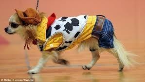 Dog clothes - ORchard Jonesnapia