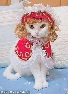 Cat - OVice Books/Caters