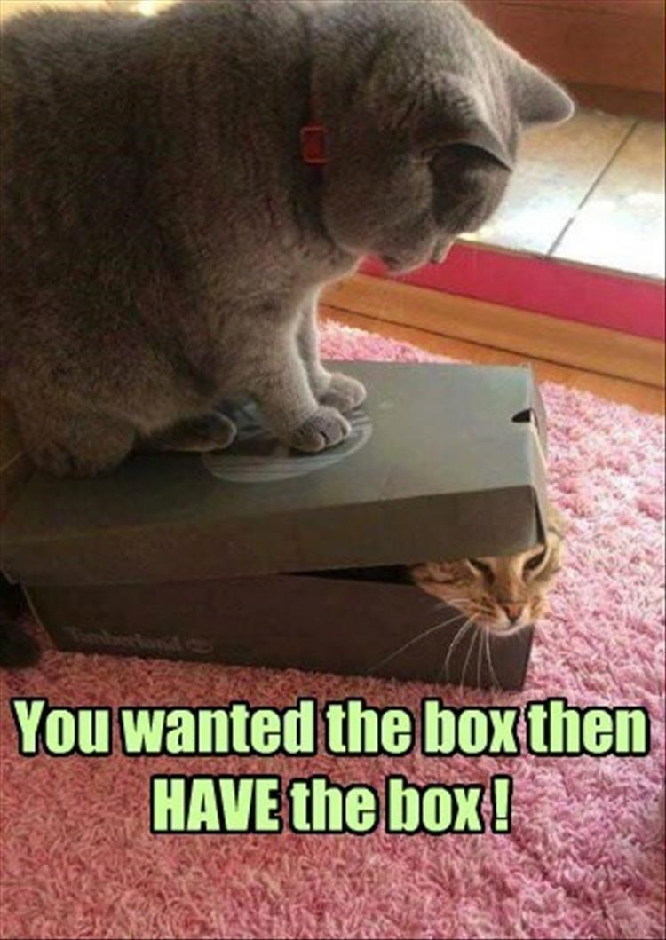Funny cats fighting over a shoe box