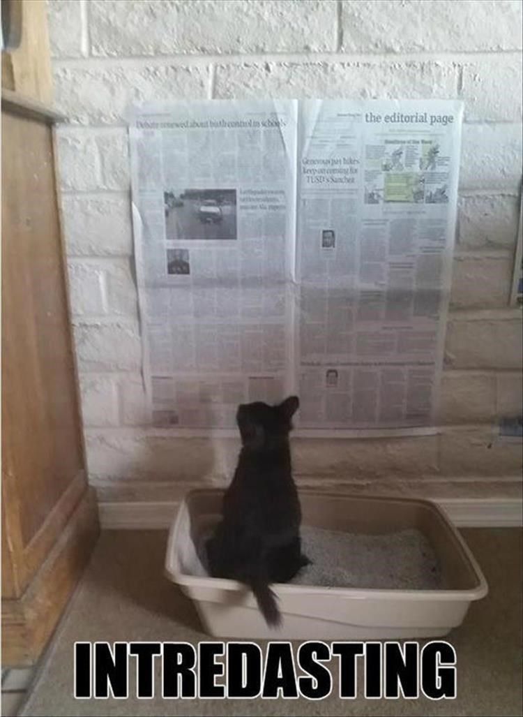 Cat reading a newspaper while on the kitty litter box.