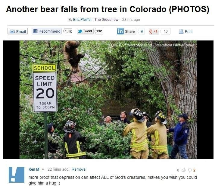 Vegetation - Another bear falls from tree in Colorado (PHOTOS) By Eric Pfeiffer The Sideshow-23 hrs ago in Share 9g Recommend 1.4k Tweet 13 +1 10 Email Print COURTESY MattStenstand- Steamboat Pilot& Today SCHOOL SPEED LIMIT 20 700AM TO 500PM 22 mins ago Remove o 2 Ken M more proof that depression can affect ALL of God's creatures, makes you wish you could give him a hug :