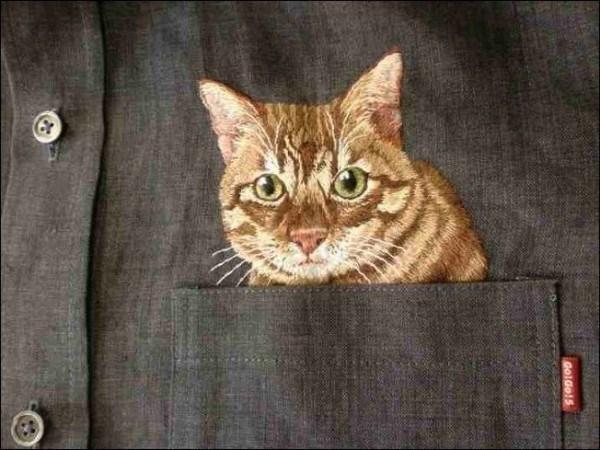 Cat - Goldols