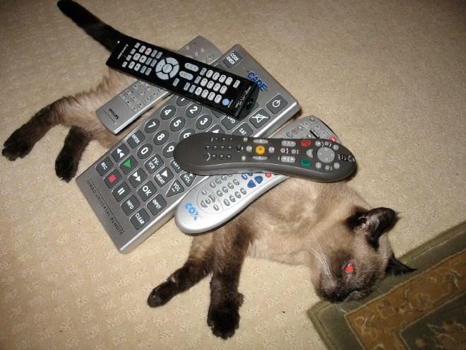 Cat - SAT Ceraoo 0OCCCD :2 w CADE tLertYOR coX esresi OK POT CLEAR sUMtO UNIVERSAL HMOT