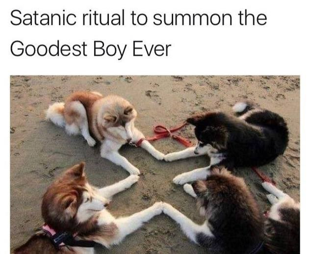 Funny meme about dogs summoning the goodest boy ever.
