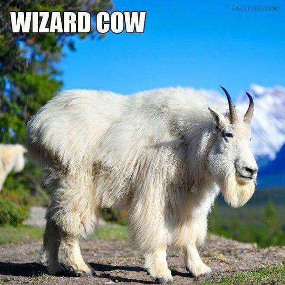 Goats - EATLIVER COM WIZARD COW