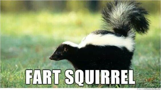 Striped Skunk - FART SQUIRREL PHOTO sc