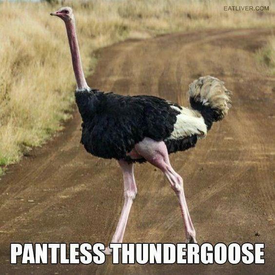 Bird - EATLIVER.COM PANTLESS THUNDERGOOSE