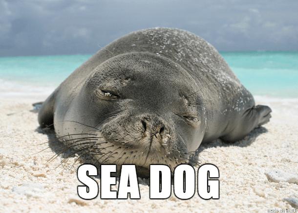 Vertebrate - SEA DOG