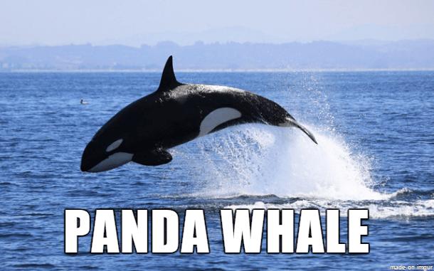 Marine mammal - PANDA WHALE made on imgur