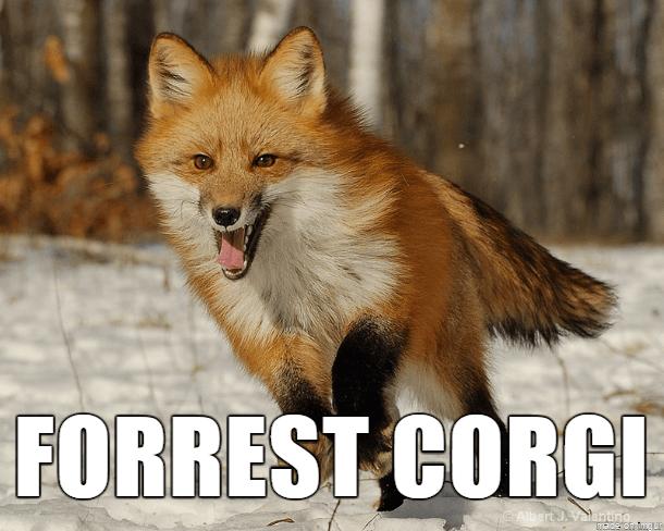Mammal - FORREST CORGI Albert Jvalantng made on imgur