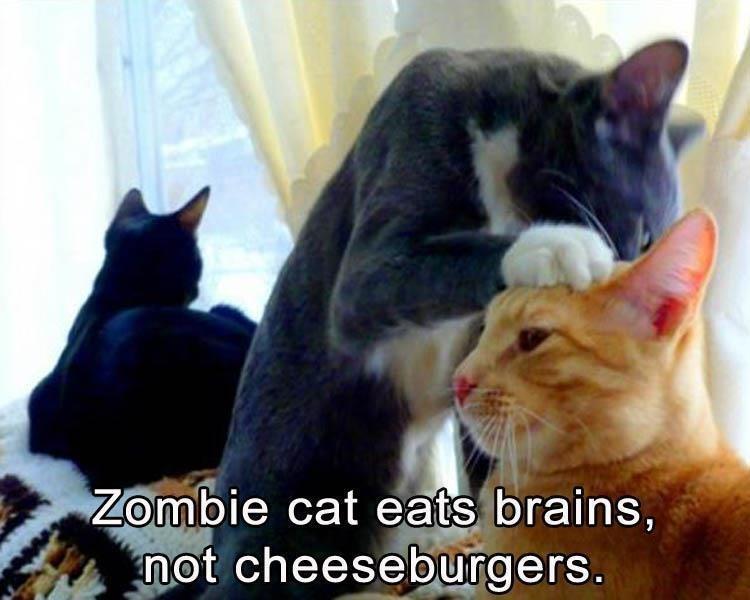 Cat - Zombie cat eats brains, not cheeseburgers.