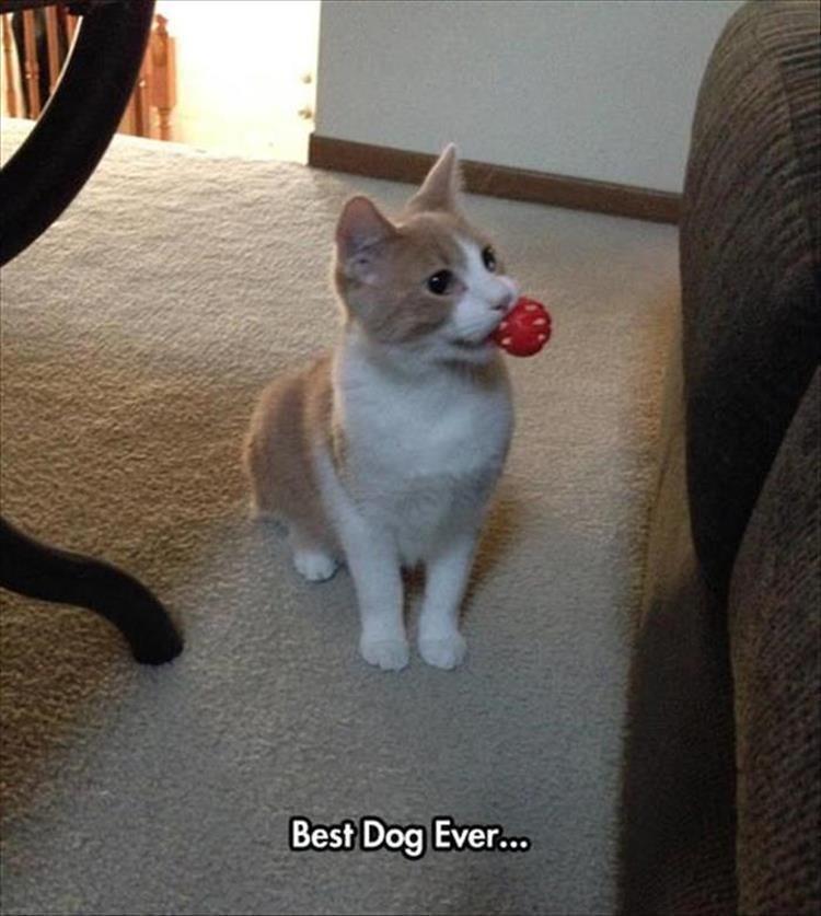 Mammal - Best Dog Ever...