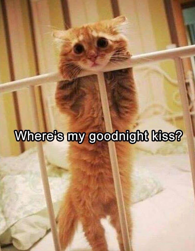Cat - Where's my goodnight kiss?