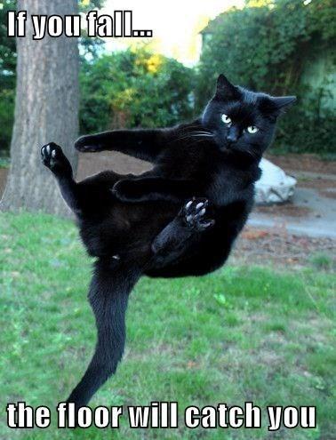 Cat - li vou fal... the floor will catch you