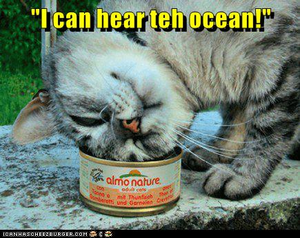 "Cat - ""Ican hear teh ocean"" almo nature edult cats Tonno e mit Thunfisch Then n Gomberefti und Garnelen Ce CANHHSCHEEEURGER. COM"